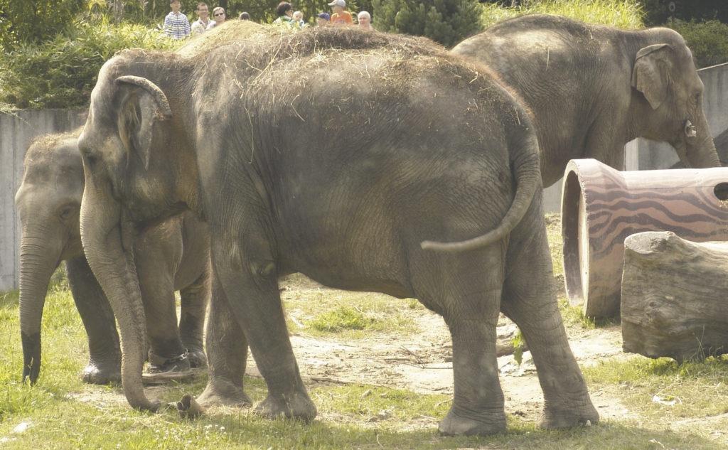 sloni-v-zoo-ostrava